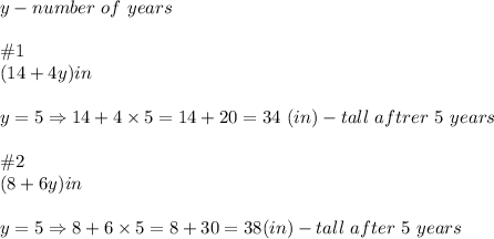y-number\ of\ years\\\\\#1\\(14+4y)in\\\\y=5\Rightarrow14+4\times5=14+20=34\ (in)-tall\ aftrer\ 5\ years\\\\\#2\\(8+6y)in\\\\y=5\Rightarrow8+6\times5=8+30=38(in)-tall\ after\ 5\ years